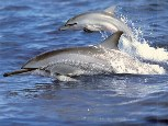 Dolphin Healing Quest