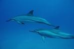 Dolphin Spirit Quest
